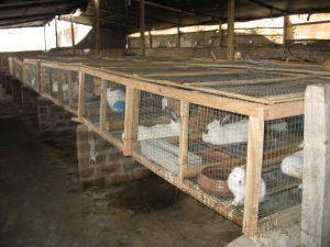 Jaulas artesanales para conejos