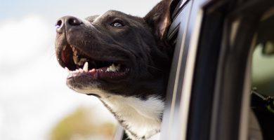 Jaulas para perros coche