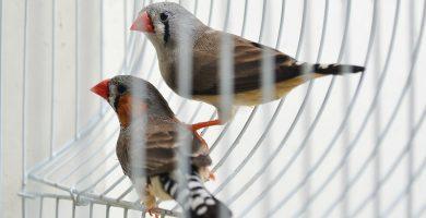 Jaulas para pájaros baratas