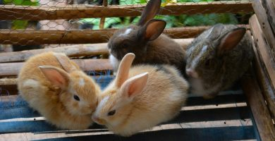 jaulas para conejitos