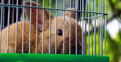 Jaulas conejos