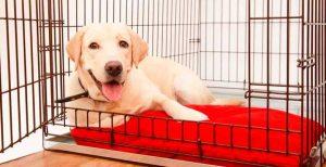 jaulas plegables para perros
