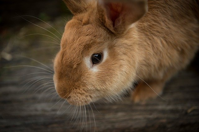 jaulas para conejos
