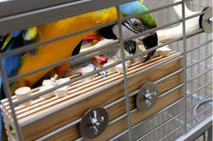 jaulas para pájaros grandes