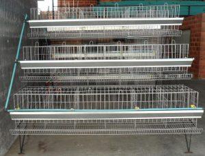 Cómo deben conformarse las jaulas para gallinas ponedoras