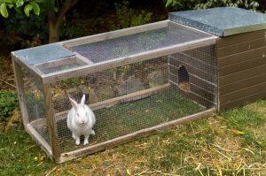 Jaulas grandes para conejos