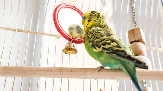 Cómo elegir las mejores jaulas para aves