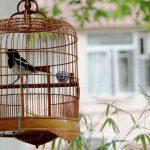 Comprar jaulas para aves