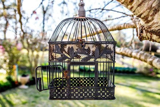 jaulas para aves
