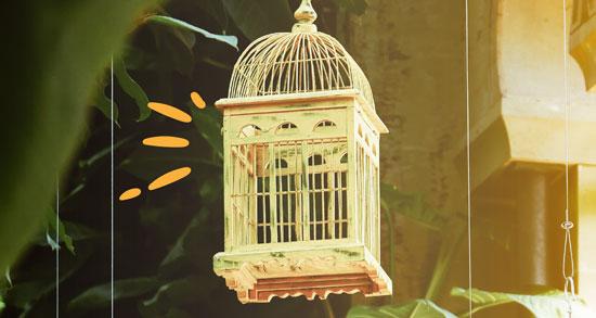 que jaulas para aves comprar