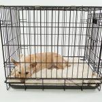 Jaulas trampa para perros