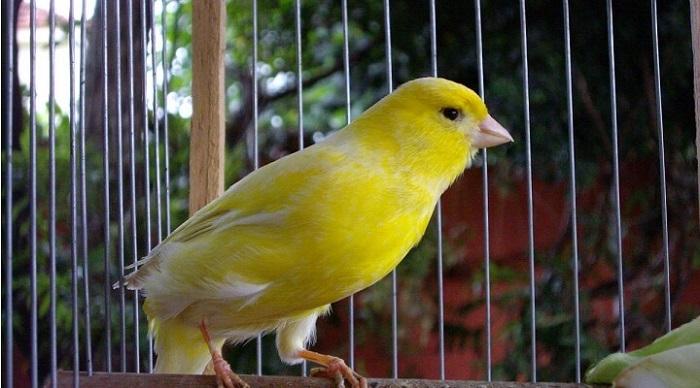 Jaulas de cría de canarios baratas